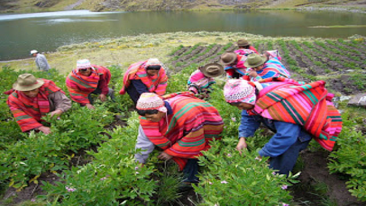 Cuzco Tours, Traditional agriculture